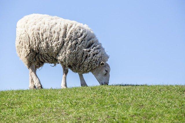 kołdra wełniana, kołdra z wełny owczej, kołdra z wełny