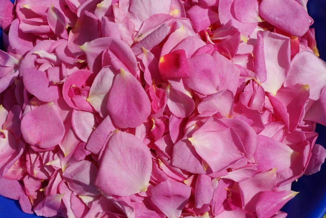 olejek różany, olejek z drzewa różanego, olejki eteryczne cena
